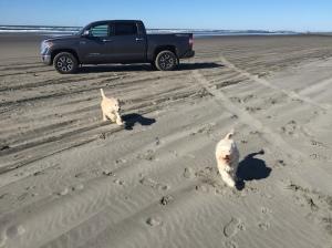 Roxy and Delta