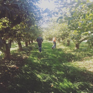 Frolicking in the apple orchard