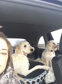 Taking the pups to Grandmas house